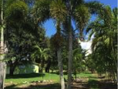 Fox Trail Palm